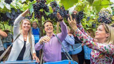 Festa de Abertura da Colheita da Uva em Caxias do Sul 390x220 - Caxias promove Festa de Abertura da Colheita da Uva