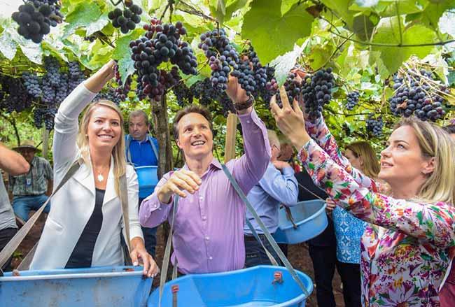Festa de Abertura da Colheita da Uva em Caxias do Sul - Caxias promove Festa de Abertura da Colheita da Uva