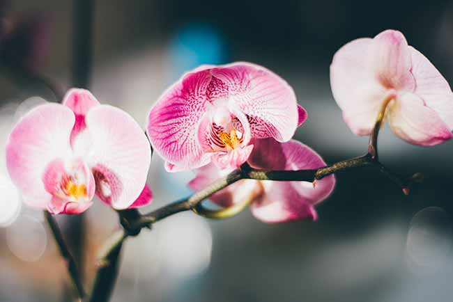 Orquidea 2 - Dicas de flores para decorar a casa no verão