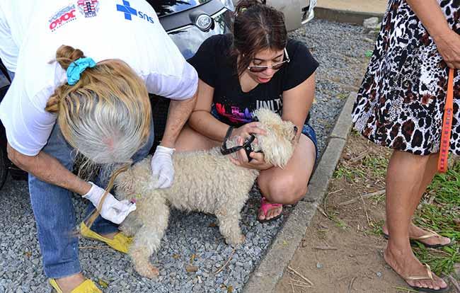 Zoonoses vanicacao antirabica Foto mazinhogomes - Liq realiza feira para adoção de animais abandonados em João Pessoa