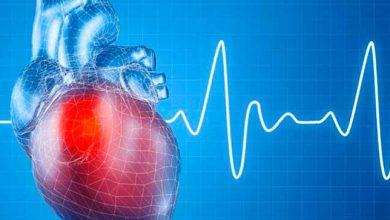 cardi 2 390x220 - Pesquisadores da USP desenvolvem molécula que pode ajudar a combater insuficiência cardíaca