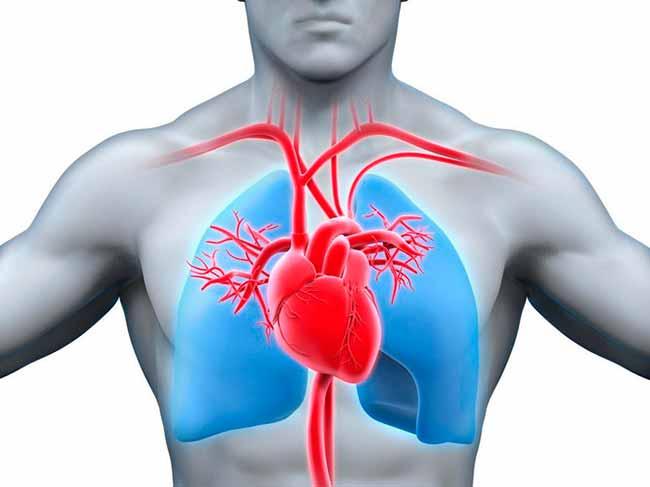 coraç - Má circulação podem estar relacionada a problemas venosos e arteriais