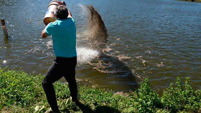 criação de tilápia na bacia do Rio Uruguai - Liberada criação de tilápia na bacia do Rio Uruguai
