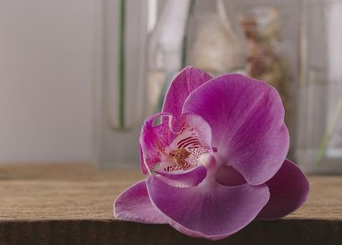 flor 4 - A flor certa para momentos especiais