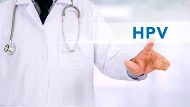 hpvtran 390x220 - Mais de 80% da população sexualmente ativa tem HPV