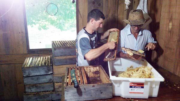 mel - Colheita do mel segue intensa em Vacaria