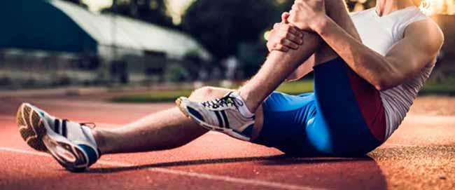muscatle - O funcionamento das fibras musculares