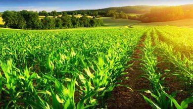 Agroneócio 390x220 - Faturamento do setor agropecuário cresce no Brasil