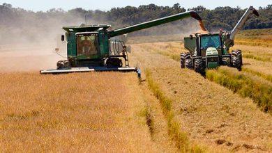 arroz bayer 390x220 - Bayer apresenta novidades na 29ª Abertura da Colheita do Arroz no RS