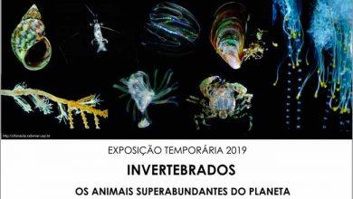 ceclimar 390x220 - Exposição sobre invertebrados é destaque no Ceclimar, em Imbé