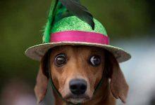 dogcarn 220x150 - Cuidados com os pets no Carnaval