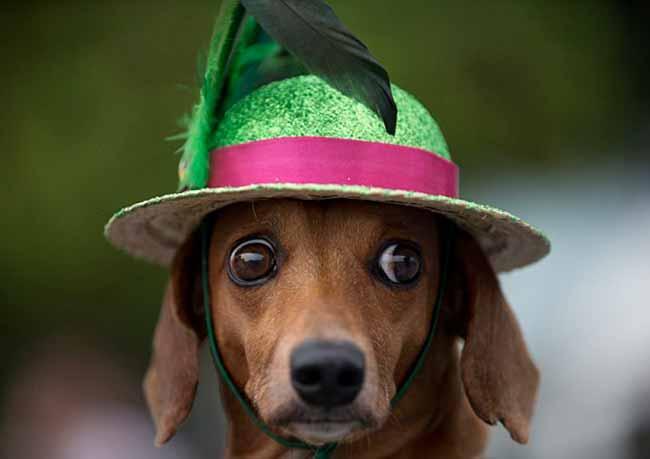 dogcarn - Cuidados com os pets no Carnaval