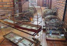 gaiolas Pássaros foram enviadas para o IBAMA 220x150 - Semam apreende pássaros no bairro Santo Afonso em Novo Hamburgo