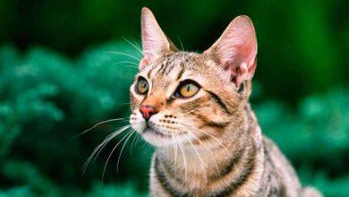 gato 390x220 - Dia Mundial do Gato: dicas e cuidados com o bichano