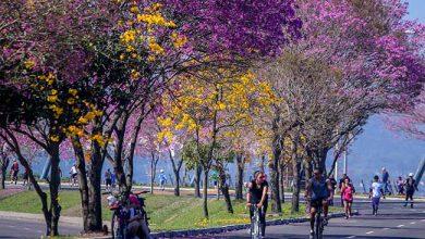 poa 390x220 - Porto Alegre estimula atitudes saudáveis para o Dia Mundial do Câncer