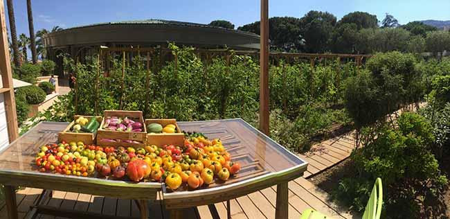 sbm mc vegetable garden 0003 © MONTE CARLO Société des Bains de Mer - Mônaco apresenta roteiro de viagem sustentável