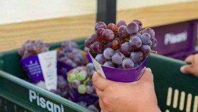 Distribuição de uva chega a 50 toneladas em Caxias do Sul 390x220 - Distribuição de uva chega a 50 toneladas em Caxias do Sul