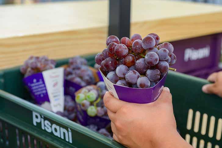 Distribuição de uva chega a 50 toneladas em Caxias do Sul - Distribuição de uva chega a 50 toneladas em Caxias do Sul