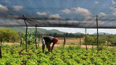 Projeto do Banco Mundial impulsionará agricultura sustentável no Brasil 390x220 - Projeto do Banco Mundial impulsionará agricultura sustentável na Paraíba