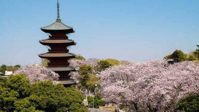 The Peninsula Tokyo celebra a temporada das cerejeiras 1 390x220 - The Peninsula Tokyo celebra a temporada das cerejeiras