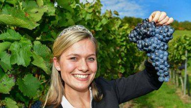 rainha do vinho alemã Carolin Klöckner 390x220 - VINHO: TENDÊNCIAS NA 25ª EDIÇÃO DA PROWEIN ALEMANHA