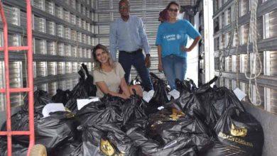 uma tonelada de alimentos 390x220 - Hellen Carolina doa mais de uma tonelada de alimentos arrecadados