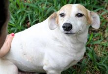 20190412 LucianaAbdur CahorrosAdocaoCanil 016 220x150 - Esteio: canil municipal busca novos lares para cães