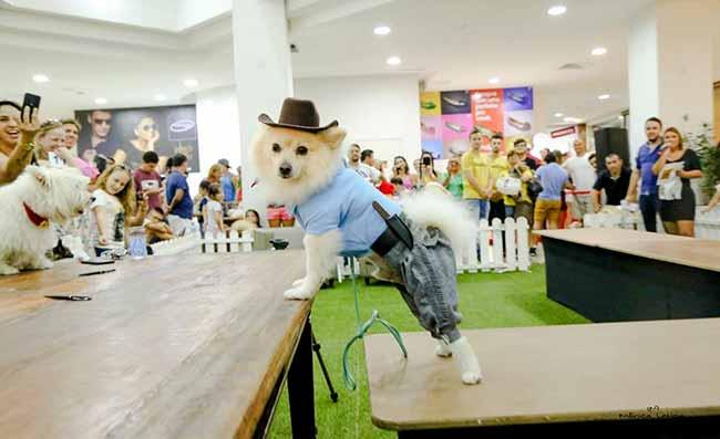 Evento pet do Atlântico Shopping 2 - Evento pet do Atlântico Shopping trará feira de adoção, cãocurso e desfile de cães