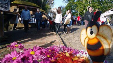 Feira do Mel Rosca e Nata 390x220 - Inscrições para feirantes da Feira do Mel, Rosca e Nata começam segunda-feira