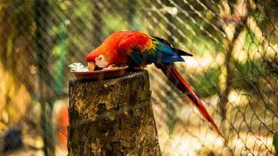 João Machado 22 390x220 - Mini Zoo de Canoas inicia campanha de arrecadação de jornais