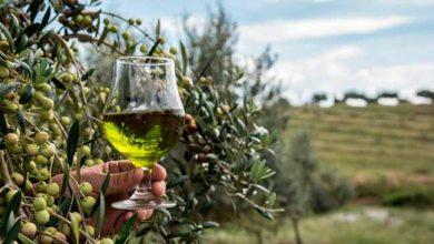 Produtores de azeite de oliva extravirgem do RS divulgam marcas em feira no sábado 390x220 - Produtores de azeite de oliva gaúcho divulgam marcas em feira no sábado