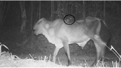 morcego raiva 390x220 - RS: secretaria orienta para controle de raiva herbívora