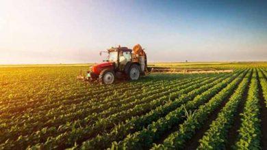 permanência de jovens no campo 390x220 - Prefeitura de Caxias do Sul quer dar bolsas de estudo a filhos de agricultores