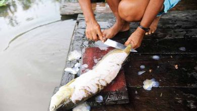 pesca artesanal 6 390x220 - Pesquisa mostra quais os peixes mais consumidos no Brasil