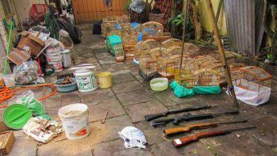 50 aves resgatadas em Caxias do Sul 3 390x220 - Órgãos Ambientais resgatam quase 150 aves em Caxias do Sul
