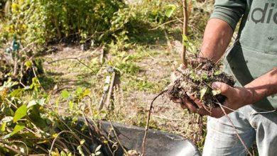 Acibalc Balneário Camboriú natureza 3 390x220 - Acibalc adota prática sustentável com plantio de árvores