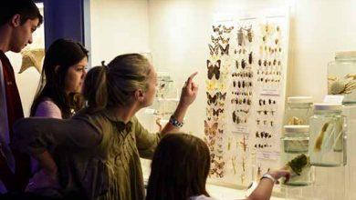 Atrações do Museu reúnem famílias 390x220 - Museu em Porto Alegre tem descontos e programação para as mães