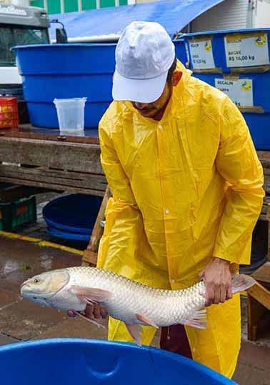 Feira do Peixe Vivo em Caxias do Sul 2 - Feira do Peixe Vivo movimenta milhares de pessoas na Praça Dante Alighieri