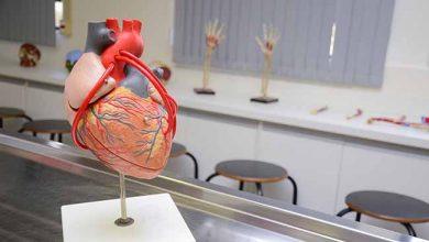 Programa de doação de corpos da unisinos de são leopoldo 390x220 - Unisinos tem Programa de Doação de Corpos para estudos