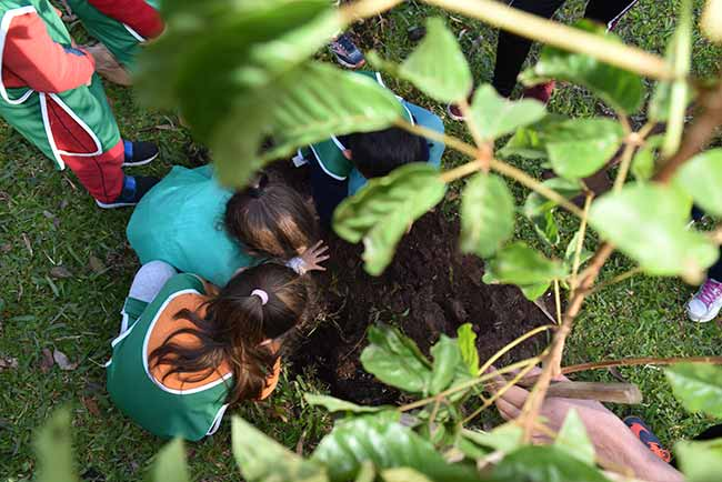 Semana do Meio Ambiente 1 - Dois Irmãos: Semana do Meio Ambiente começa segunda-feira