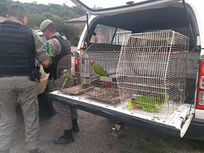 Semma e Patram resgatam papagaios e caturritas em Caxias 2 - Semma e Patram resgatam papagaios e caturritas em Caxias