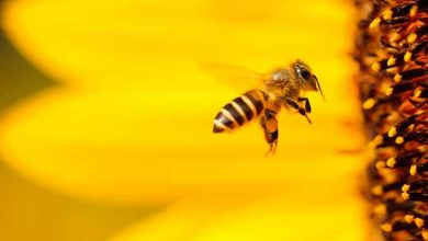 abelha e flor amarela 390x220 - Semana do Meio Ambiente: confirma programação em Caxias do Sul