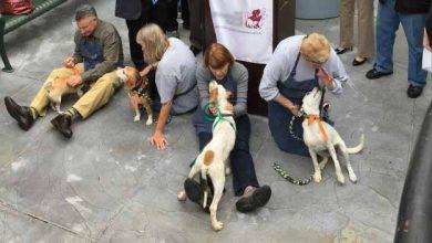 Photo of Estância Velha: feira teve 14 pets adotados