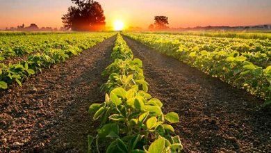 agrotech 390x220 - Raks Tecnologia Agrícola integra programa de aceleração nos EUA