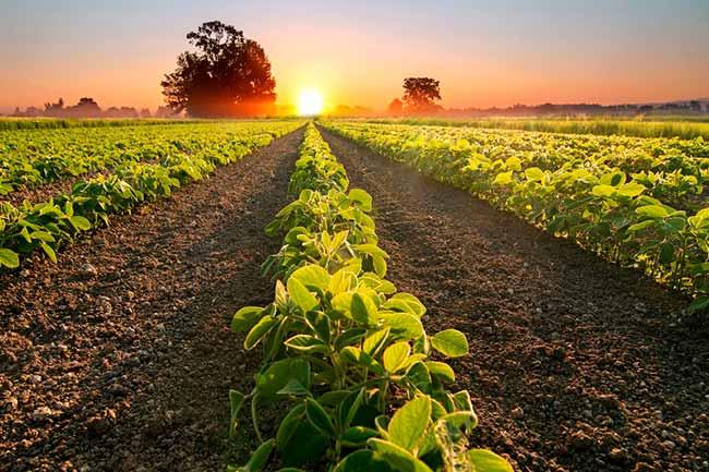 agrotech - Raks Tecnologia Agrícola integra programa de aceleração nos EUA