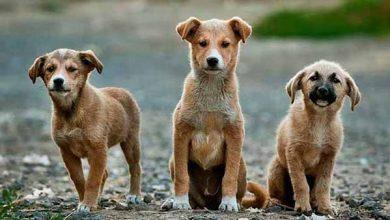 cães de rua 390x220 - Até sexta-feira atendimento da Sempa será no Canil Municipal de São Leopoldo