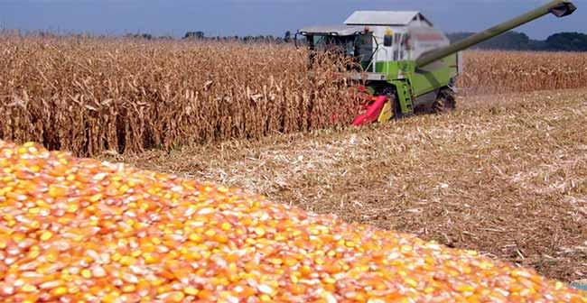 mil - Brasil é o segundo maior exportador mundial de milho