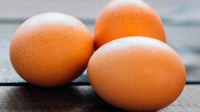 ovo 390x220 - Produção de ovos tem primeira queda em 22 anos