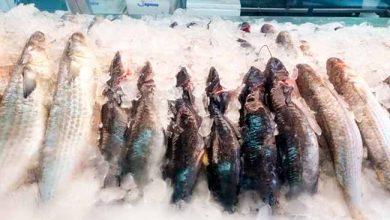 Photo of Fiscalização dos pescados no Mercado Público de Porto Alegre