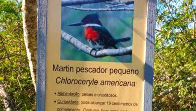 placas de identificação espécies 390x220 - Educação Ambiental instala placas informativas em Novo Hamburgo